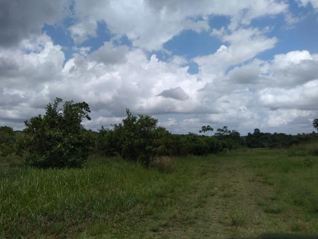 No Pará,175 hectares ha região de Castanhal-Pará por 1.400.000,00 documentada - Foto 8