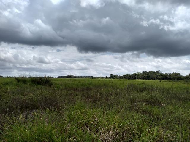 No Pará,175 hectares ha região de Castanhal-Pará por 1.400.000,00 documentada - Foto 15