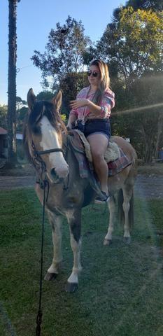 Casal cavalos crioulos - Foto 4