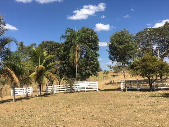 Fazenda 25 Alqueires. Município de Pontalina-GO - Foto 16
