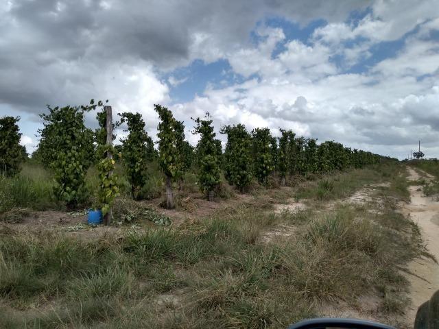 No Pará,175 hectares ha região de Castanhal-Pará por 1.400.000,00 documentada