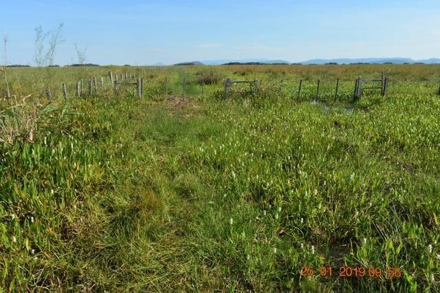 Fazenda na regiao de corumba, para arrendamento - Foto 9