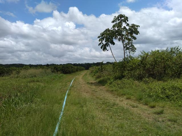 No Pará,175 hectares ha região de Castanhal-Pará por 1.400.000,00 documentada - Foto 13