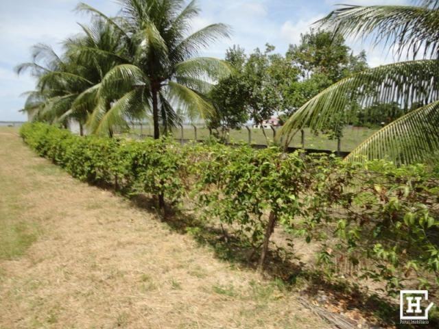 Terreno à venda - mosqueiro (zona de expansão) - Foto 3