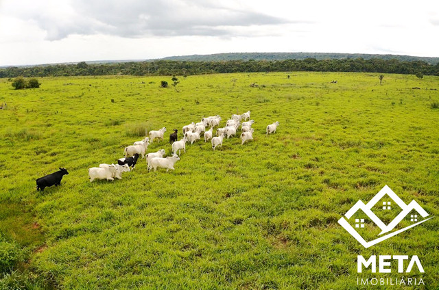 Fazenda Rondonia / parecis / pimenta Bueno. - Foto 6