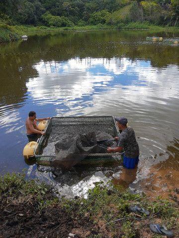 Tanque rede  - Foto 2