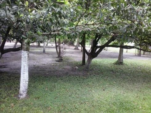Chácara em Igarassú. Casa boa, 2 Piscinas, campo, etc - Foto 5