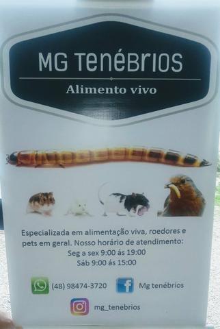 Mg Tenébrios
