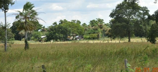 Fazenda na regiao de corumba, para arrendamento - Foto 7