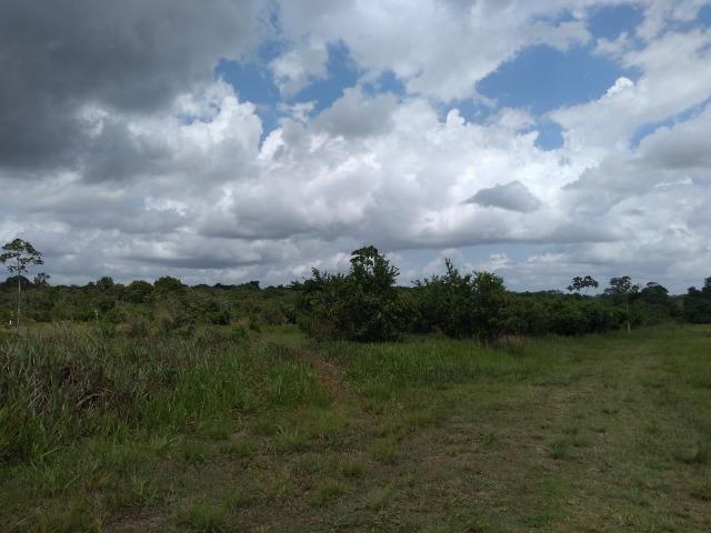 No Pará,175 hectares ha região de Castanhal-Pará por 1.400.000,00 documentada - Foto 10