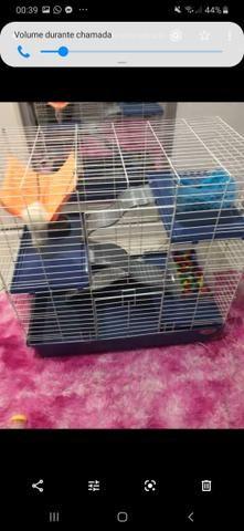 Gaiola roedores - Foto 2