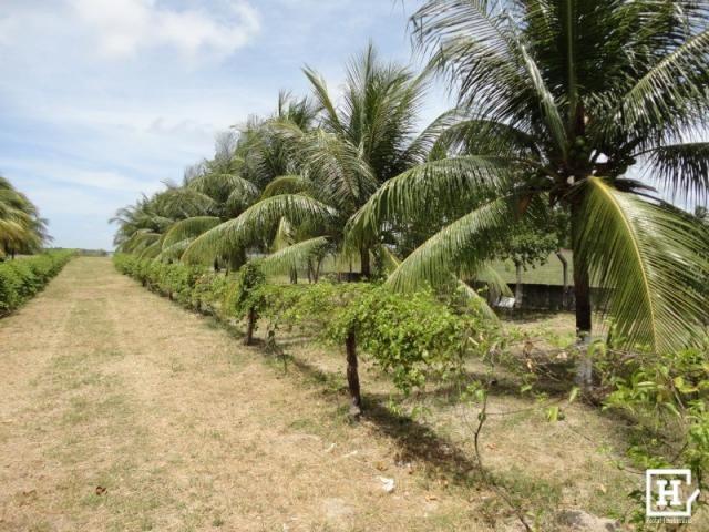 Terreno à venda - mosqueiro (zona de expansão) - Foto 2
