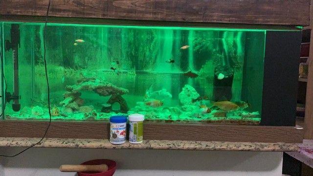 Vendo aquário completo  - Foto 3
