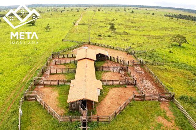 Fazenda Rondonia / parecis / pimenta Bueno. - Foto 8