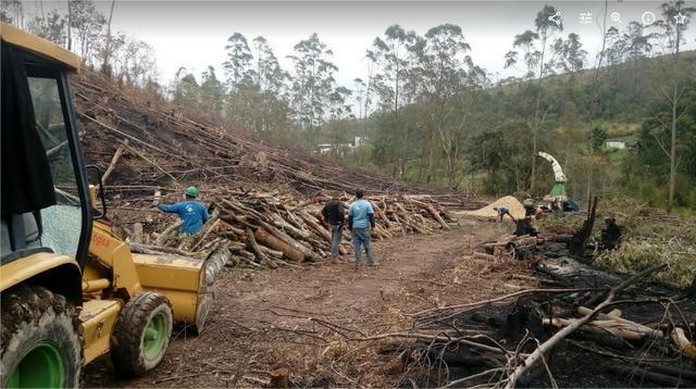 Picador Florestal - Foto 4