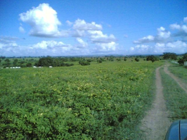 Cumaru=Vend. 15 mil p-Hect. Fazenda =Casa,Energia,Água,Piscina e muito mais - Foto 6