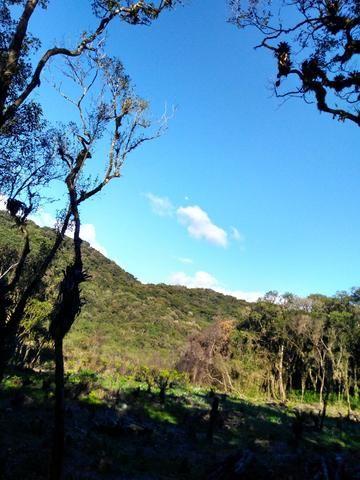 Chacara - Foto 12