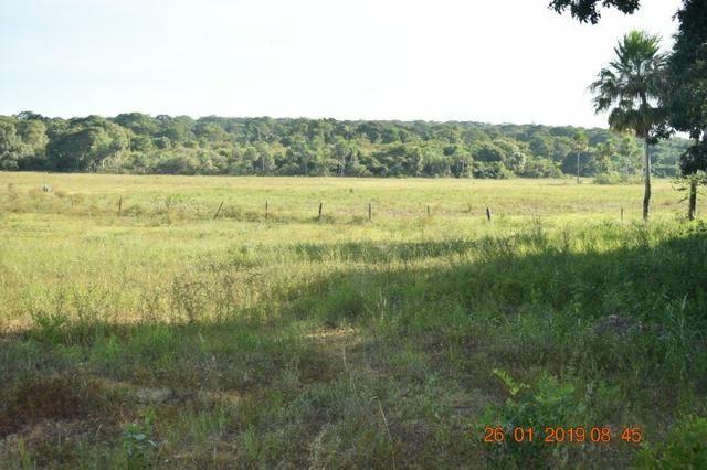 Fazenda na regiao de corumba, para arrendamento - Foto 8