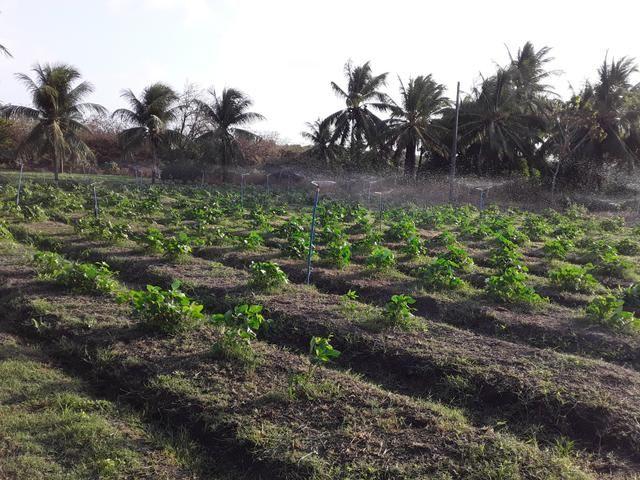 Sítio no Iguaiba - Foto 4