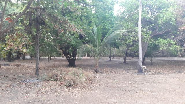 Vendo este lindo sítio em São José de Ribamar - Foto 5