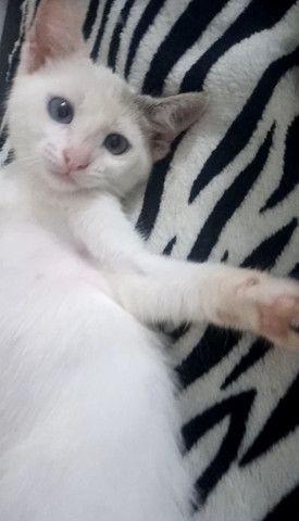 Doa-se filhote mestiça de siamês - garanto castração - Foto 2