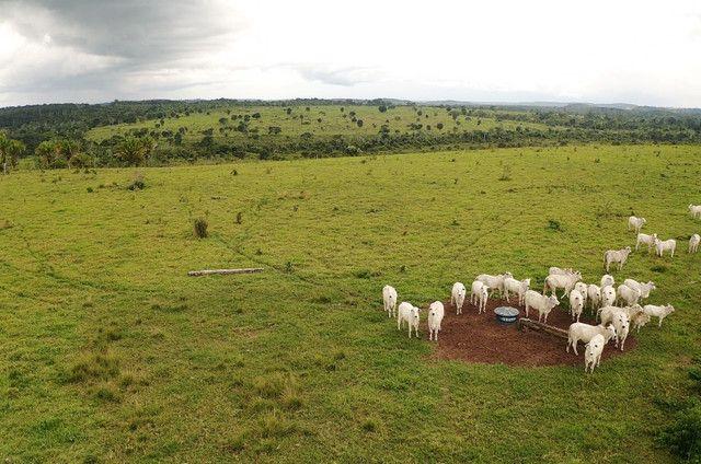 Fazenda Rondonia / parecis / pimenta Bueno. - Foto 7