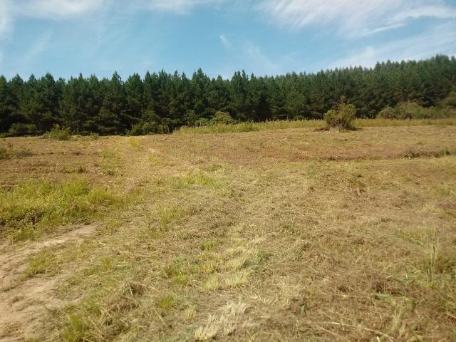 Terreno em lagoa dos ferreiras Mandirituba 24.200m 1 alqueire - Foto 10