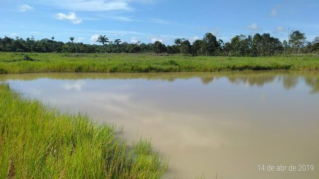 Vendo uma chácara em Alto Alegre Telefone para contato 984318501ou zap 993261225 - Foto 9