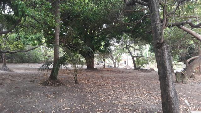 Vendo este lindo sítio em São José de Ribamar - Foto 6