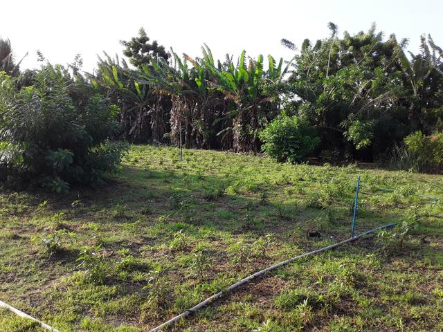 Sítio no Iguaiba - Foto 5