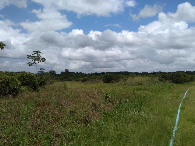 No Pará,175 hectares ha região de Castanhal-Pará por 1.400.000,00 documentada - Foto 9