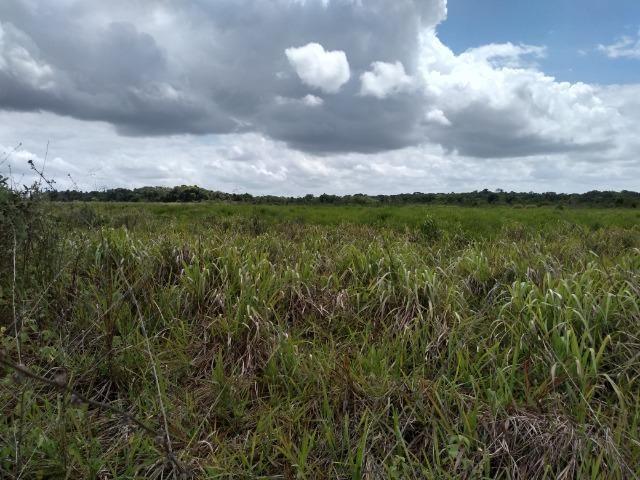 No Pará,175 hectares ha região de Castanhal-Pará por 1.400.000,00 documentada - Foto 2
