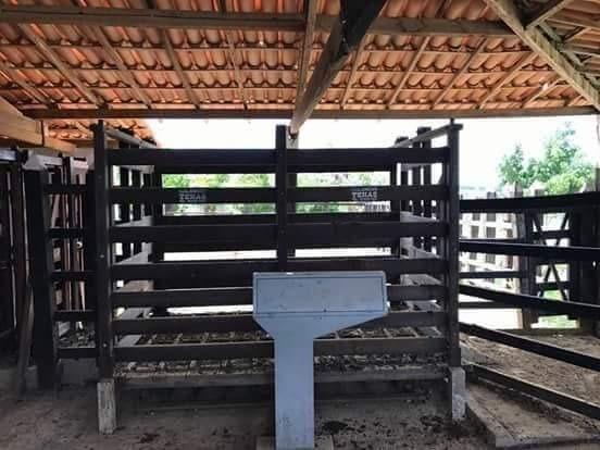 Maravilhosa fazenda com casa nova de 3/4, curral, tronco, embarcador, balança e aprisco