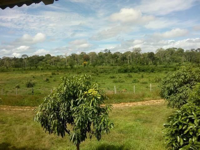 Vendo uma colônia com 100 Hectares de terra - Foto 4