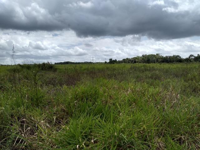 No Pará,175 hectares ha região de Castanhal-Pará por 1.400.000,00 documentada - Foto 5