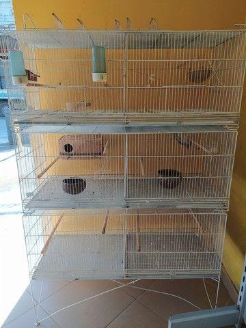 Viveiro expositor para pássaros.  - Foto 3