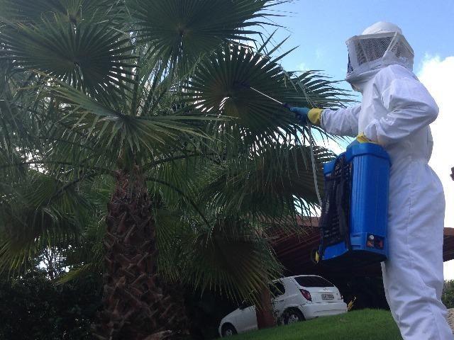 Retirada de Marimbondo / abelhas / vespas