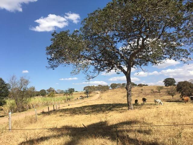 Fazenda 25 Alqueires. Município de Pontalina-GO - Foto 19