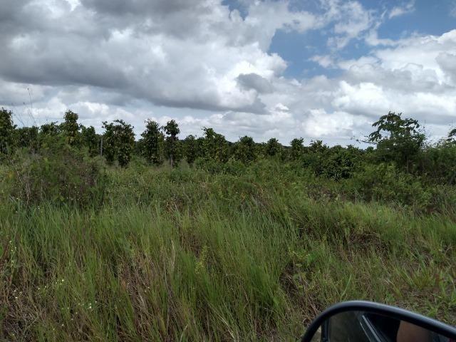 No Pará,175 hectares ha região de Castanhal-Pará por 1.400.000,00 documentada - Foto 12