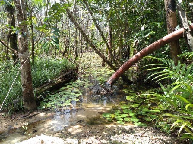 No Pará,175 hectares ha região de Castanhal-Pará por 1.400.000,00 documentada - Foto 7