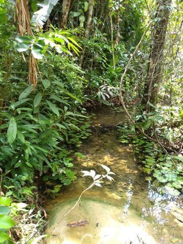 No Pará,175 hectares ha região de Castanhal-Pará por 1.400.000,00 documentada - Foto 6