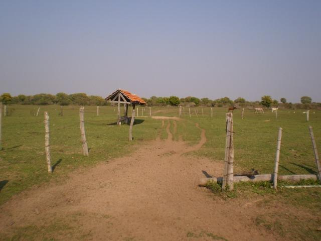 Fazenda na regiao de corumba, para arrendamento - Foto 5