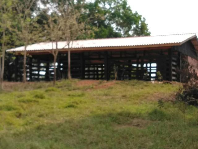 Vendo uma chácara em Alto Alegre Telefone para contato 984318501ou zap 993261225 - Foto 5