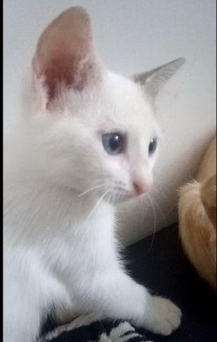 Doa-se filhote mestiça de siamês - garanto castração - Foto 3