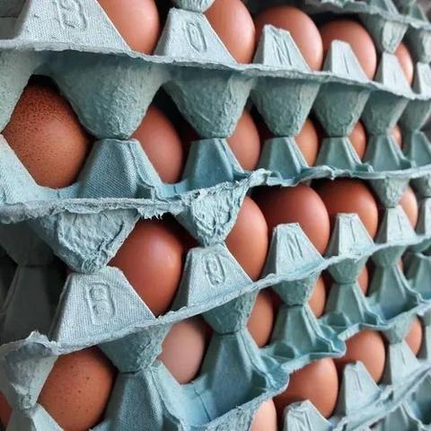 Caixa de Ovos - Foto 3