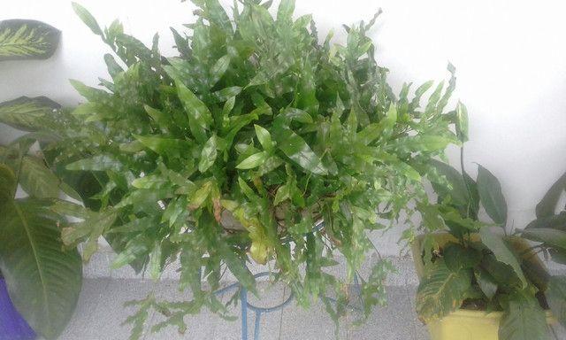 A venda Plantas - Foto 5