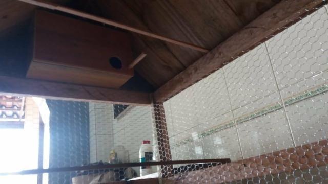 Viveiros para passarinho, coelhos, galo, galinha, porquinho da índia, etc - Foto 3