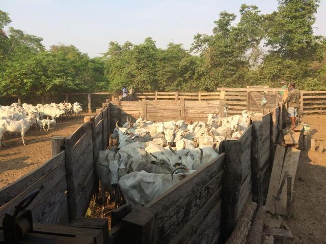 Fazenda na regiao de corumba, para arrendamento - Foto 2