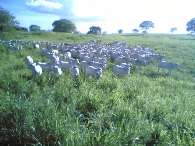 Cumaru=Vend. 15 mil p-Hect. Fazenda =Casa,Energia,Água,Piscina e muito mais - Foto 10