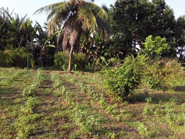 Sítio no Iguaiba - Foto 8